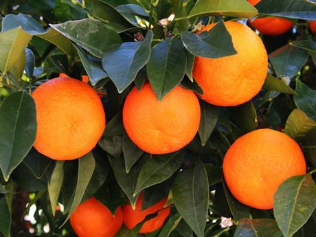 contenuto calorico di 1 arancia