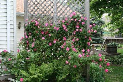 стубови за цвијеће