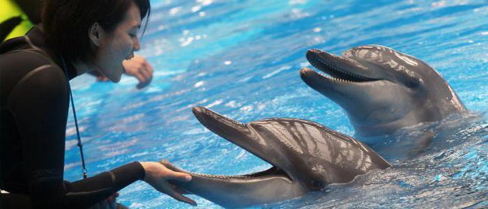 пливање са делфинима