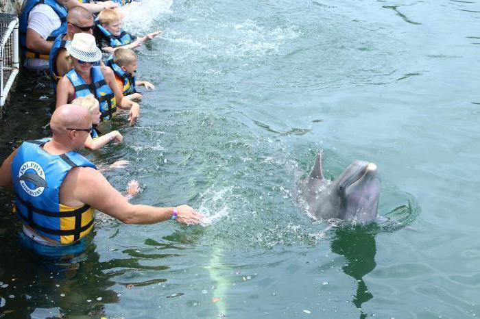 пливање са делфинима у Москви