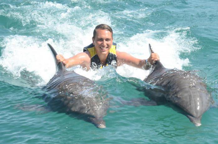 купање са делфинама