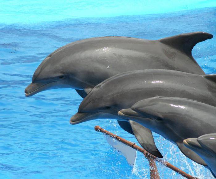 правила пливања делфина