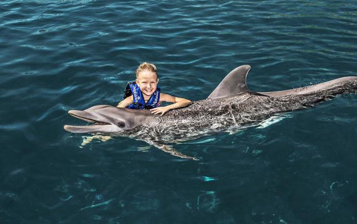 москвариум пливање са делфинима