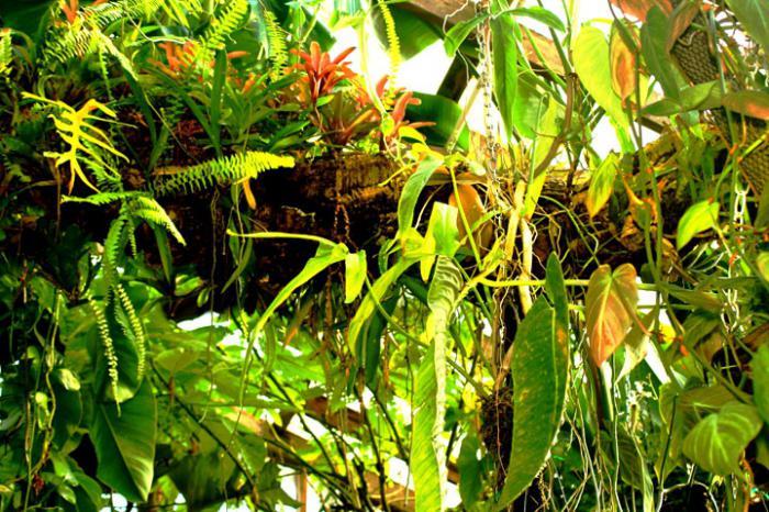 Simbiosi vegetale