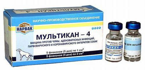 parvovirusni enteritis kod štenaca