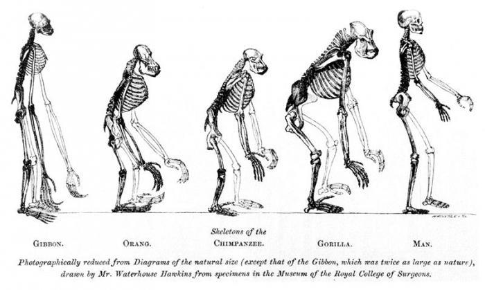syntetyczna teoria ewolucji