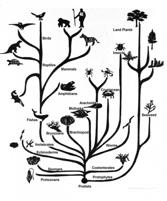 przyczyny ewolucji