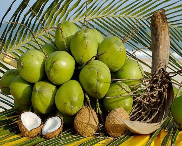 Kako jesti kokos