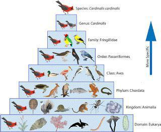таксономия на учебните цели