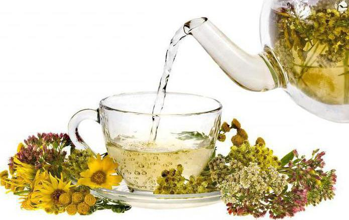 istruzioni per l'uso del tè mastophyton