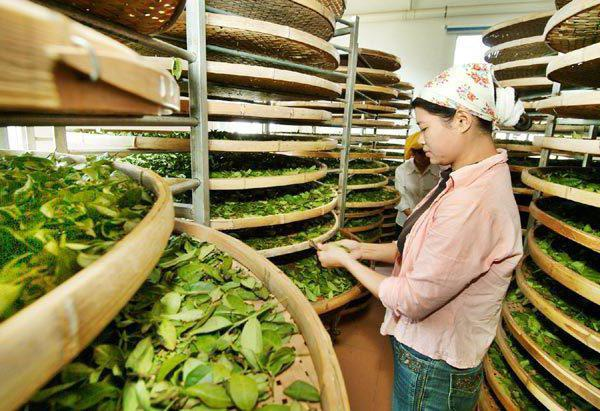 recensioni di tè e guan yin