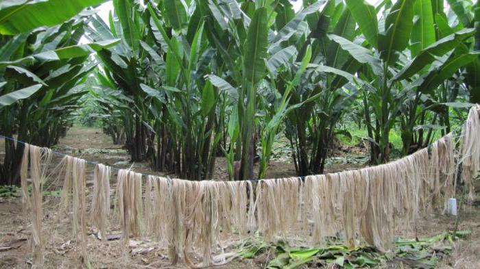 banana tekstil