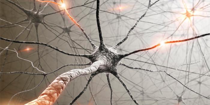 vegetativni živčni sistem