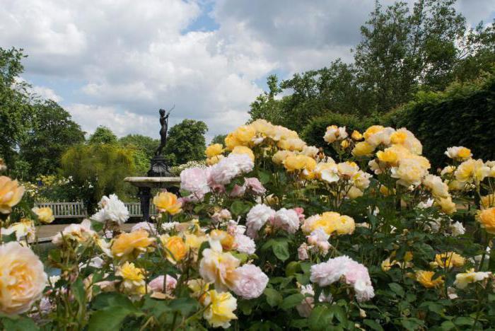 odmiany kwiatów róż na przedmieścia hodowli kanadyjskiej