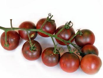 Сортове домати за открит терен