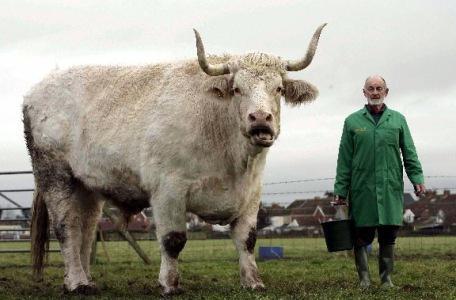 i più grandi tori del mondo