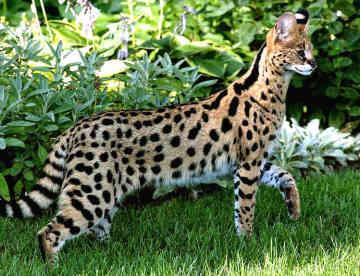pic největší kočička