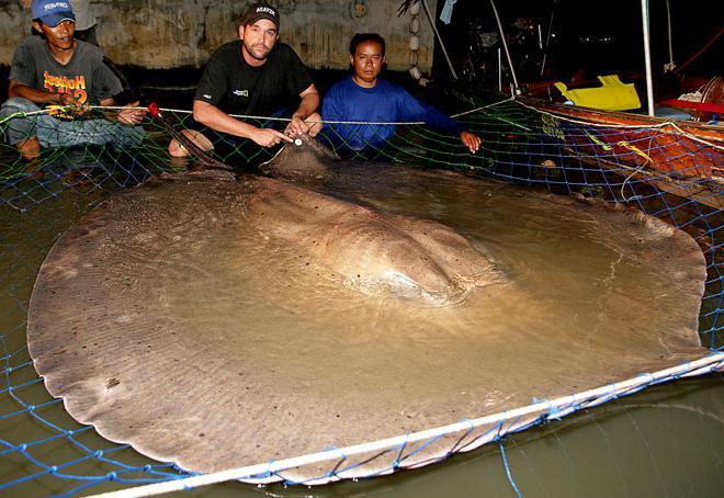 Foto del più grande pesce