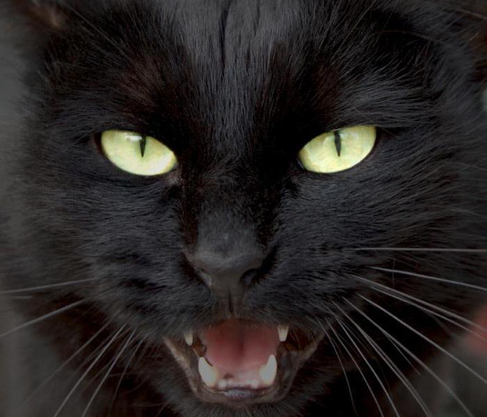 mačka uzgaja crnu boju