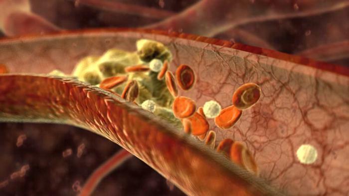 Funzioni dei vasi sanguigni