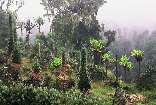 Afriško podnebje