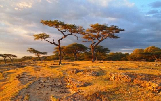 podnebni opis afrike