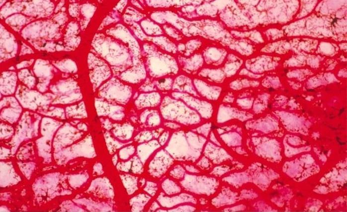 sestavo krvi
