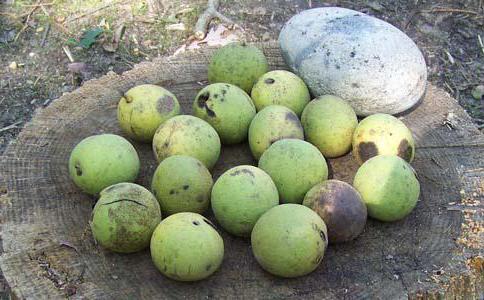 chemické složení vlašských ořechů