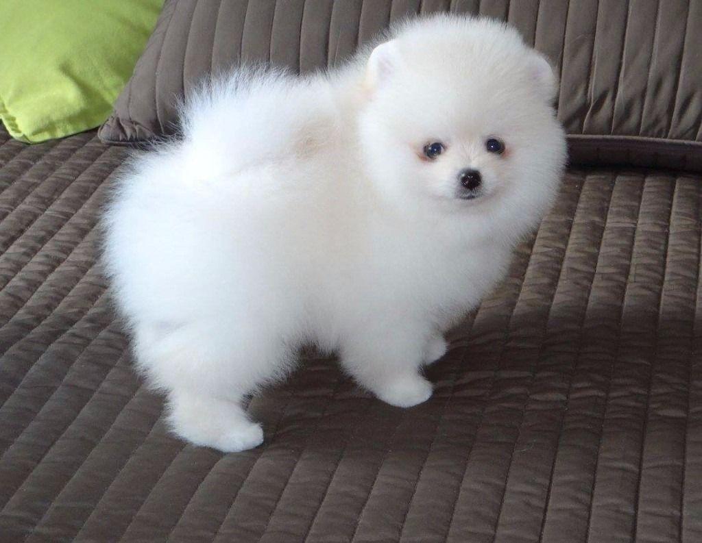 qual è l'animale più carino
