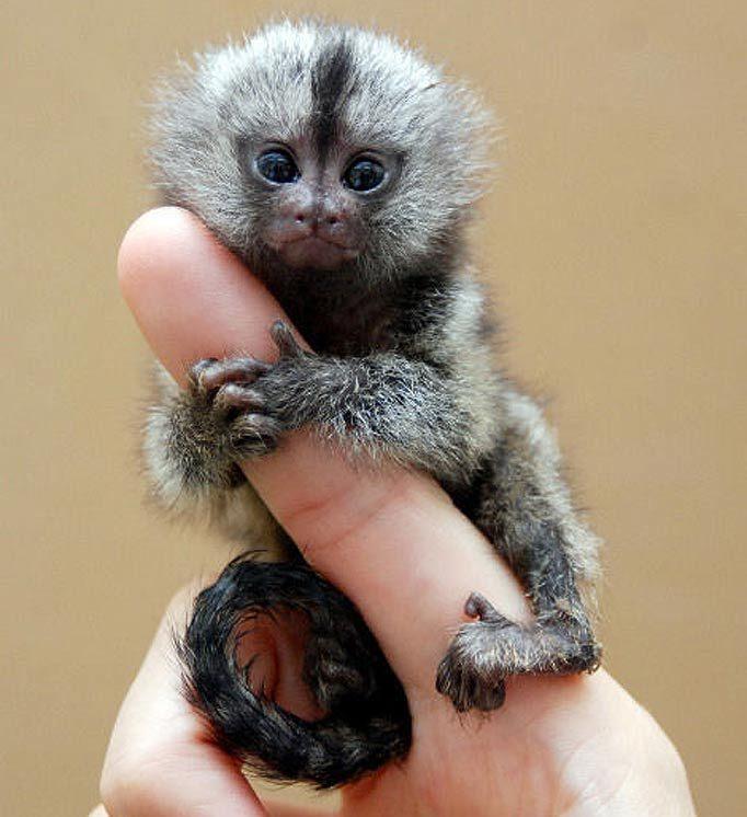gli animali più carini del mondo