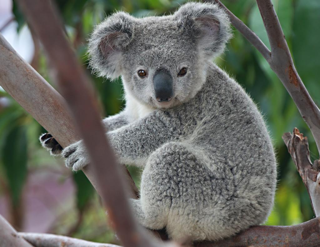 gli animali più belli e carini