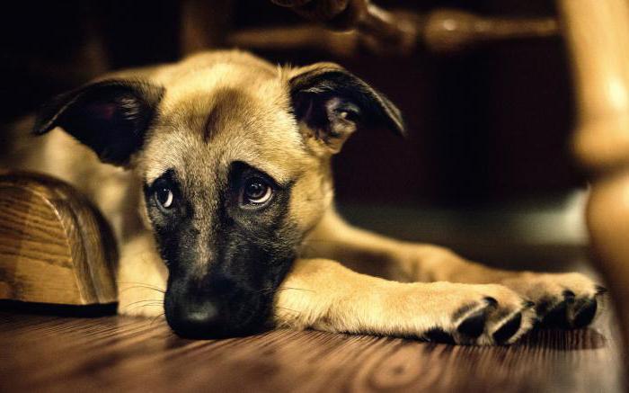 Execan za pse navodila navodila