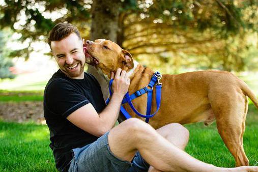 Execan za pse navodila za uporabo za pse