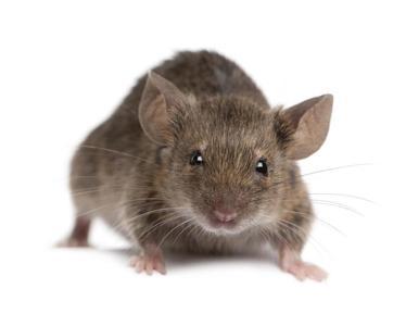repeller elettronico del ratto