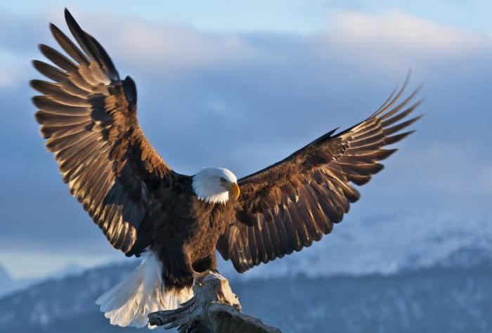 studiando la struttura esterna degli uccelli