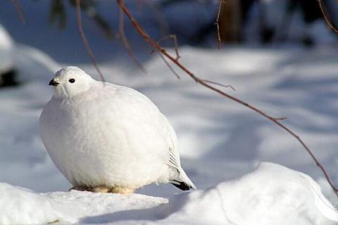 caratteristiche della struttura esterna degli uccelli