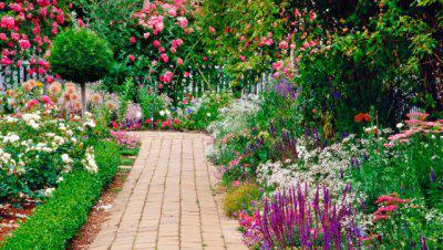 kwiaty różowe zdjęcia
