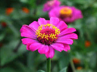 miękkie różowe kwiaty
