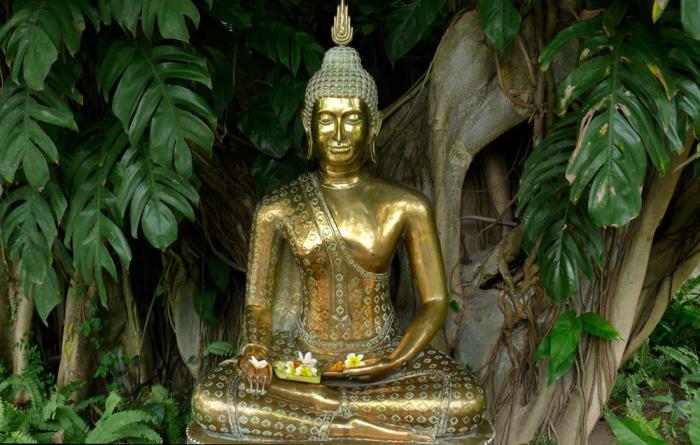 буддха теацхинг