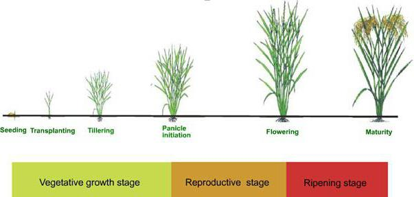 какъв е сезонът на растеж в растенията