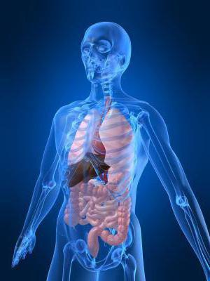 obrasci rasta i razvoja ljudskog tijela