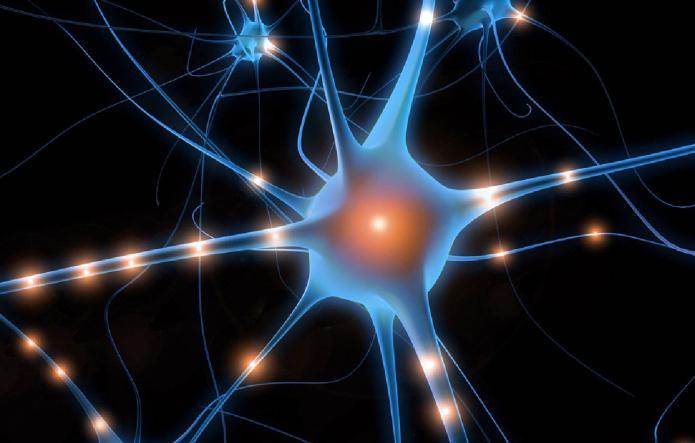 powstaje centralny układ nerwowy