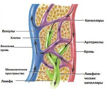 Компоненте унутрашњег окружења тела