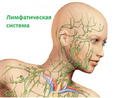 Sestava notranjega okolja telesa