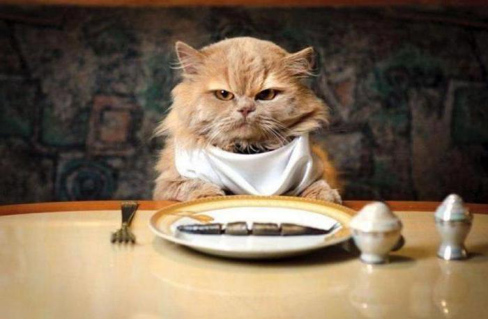 il gatto non mangia cibo secco perché