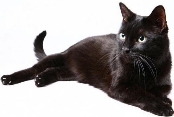 il gatto non mangia cibo secco cosa fare