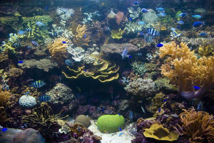 Singapore è il più grande acquario del mondo