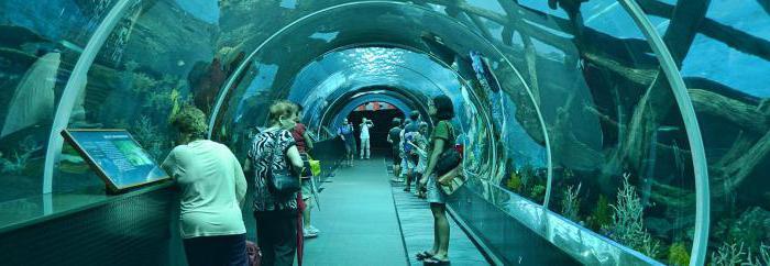 il più grande acquario del mondo
