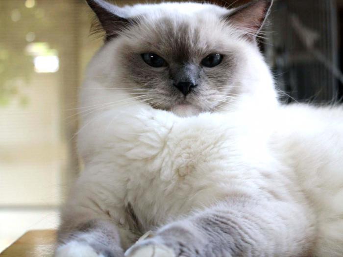 zrela uska maca hampsterx