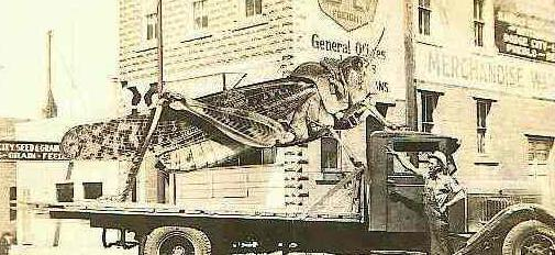 la più grande cavalletta del 1937